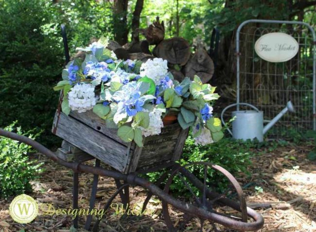 An Old wooden wheelbarrow filled with hydrangea!