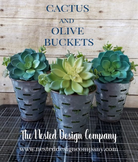 Cactus filled olive buckets on a shutter